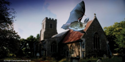 Bats in Churches Study Workshop