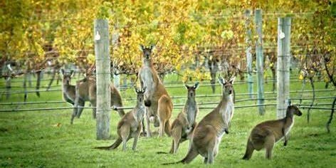 Wines from the Land Down Under