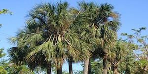All About Palms: Palm Selection and Maintenance in...