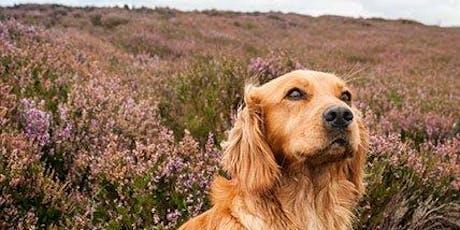 Laskill Charity Dog Walk - Supporting Leukaemia UK tickets