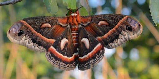 Celebrate National Moth Week at DeKorte Park!