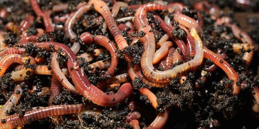 Make Your Own Worm Composter