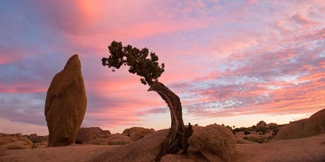 Meditate & Breathe in the Joshua Tree Vortex tickets