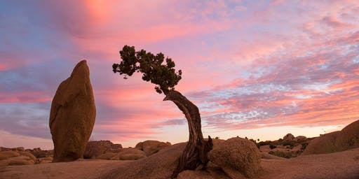 Meditate & Breathe in the Joshua Tree Vortex