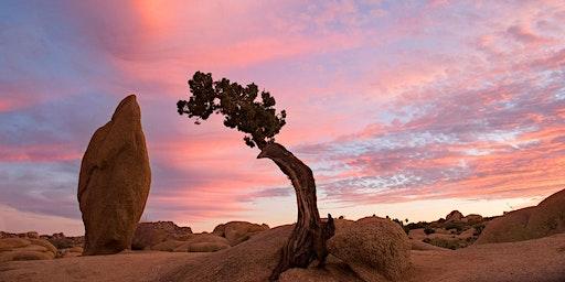 Meditate & Breathe in the Joshua Tree Vortex