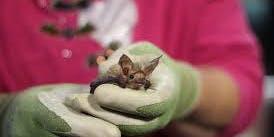 Norcal Bats