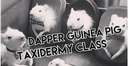 Dapper Guinea Pig Taxidermy Class tickets