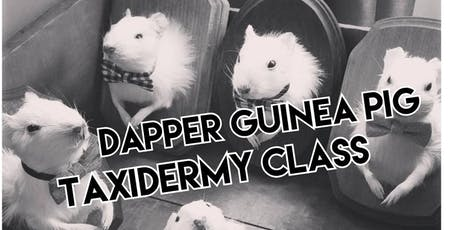 Dapper Guinea Pig Taxidermy Class tickets