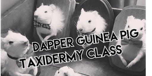Dapper Guinea Pig Taxidermy Class