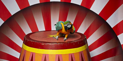 Squawk & Play: Soar Into the Bird Hotel Circus