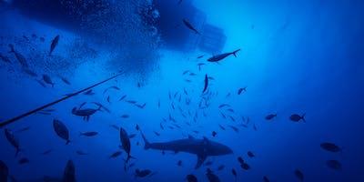 Underwater Photography on Moreton Island with Greg Sullavan