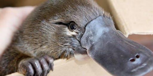 Platypus Watch Survey - Nerang