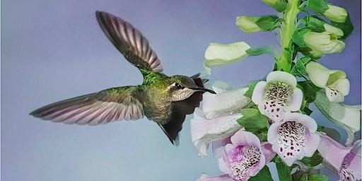 Magic of Hummingbird and Bat Photography (Aug 22-25, 2020) - WOMEN ONLY Madera Canyon, AZ