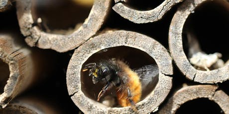 Green Living Kids: Make a Bee or Insect Hotel School Holiday Program at Kincumber Library tickets