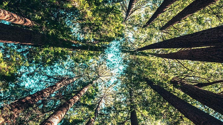 Nature Therapy  training for Coaches and Therapists: inc forest bathing image