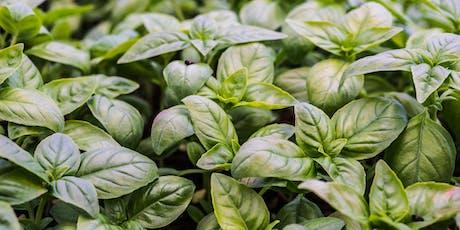 C'est moi qui l'ai planté : Atelier Plants de basilic (et de tomates) tickets