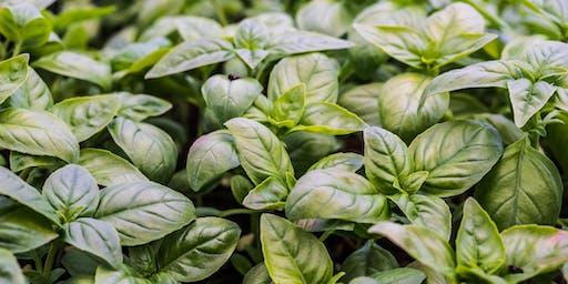 C'est moi qui l'ai planté : Atelier Plants de basilic (et de tomates)