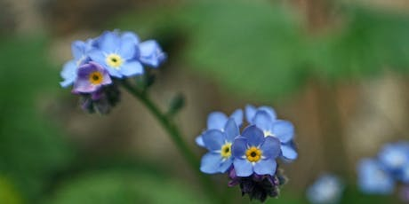 Wildflower Walk - Jardin D'Olivet tickets