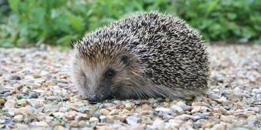 Hedgehog habitats & more!