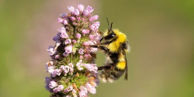 Pollinator Identification Event