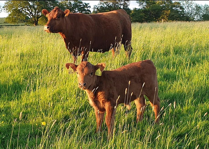 Agricology Field Day with Rob Havard: Diverse Pastures image