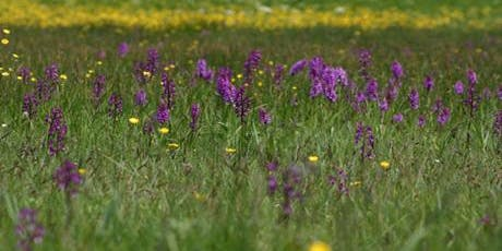 Wildflower Walk - Le Noir Pré tickets