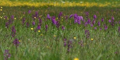 Wildflower Walk - Le Noir Pré