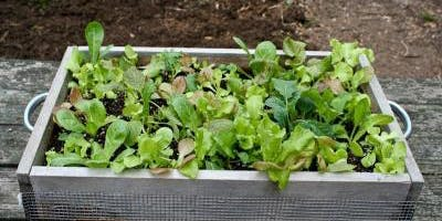 Make your Own Salad Box