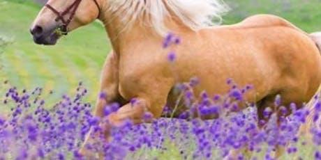 Aromaterapia Equestre: per cavallo e cavaliere biglietti