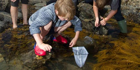 Marine Life Talk at NOC in Southampton – The Essential Guide To Rockpooling tickets