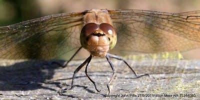 Dragonfly Meander