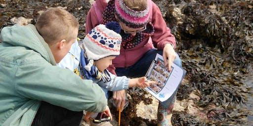 Family Rock Pooling Marine biology adventure - Gyllyngvase Beach, Falmouth