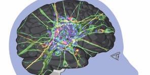 Médiation et neurosciences : Regard sur l'empathie