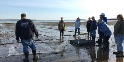 Wellfleet Shellfish Farm Tours 2019