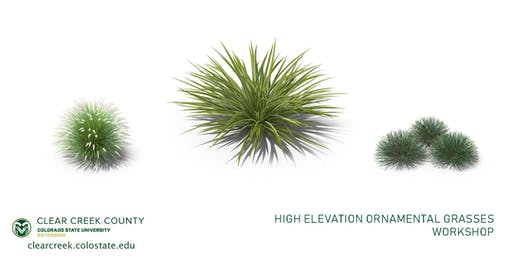 High Elevation Ornamental Grasses