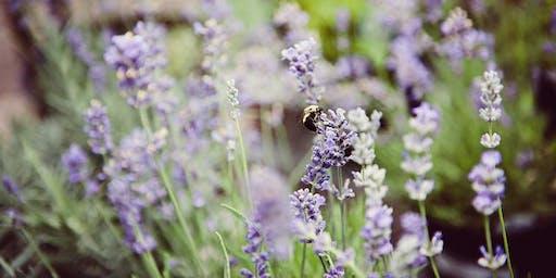 Planting Pollinators