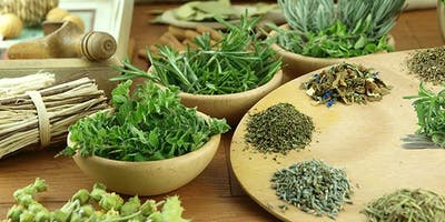Cultivo de Plantas Medicinais 28/07/2019
