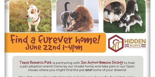 Find Your Furever Home!