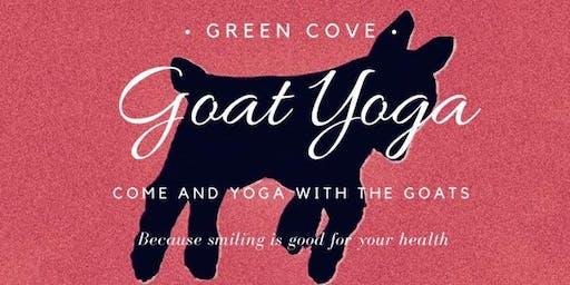 Green Cove Goat Yoga