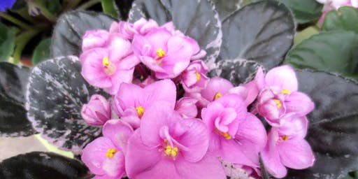 Fall African Violet Show and Sale