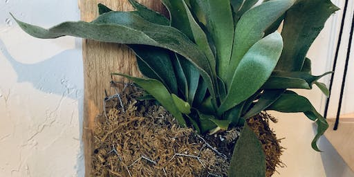 Mounting the Staghorn: A Step-By-Step Wall Fern Workshop