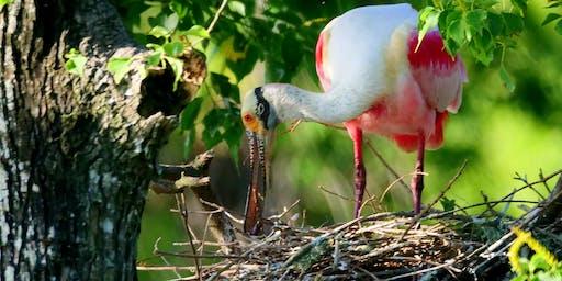 PARD Fall Birding Class