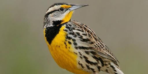 "Birdwalk: ""Birding the Fields & Trails of Historic Sotterley"""