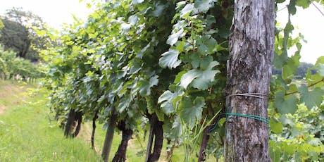 Cantina Aperta 29 Giugno | Degustazione Vino | Franciacorta biglietti