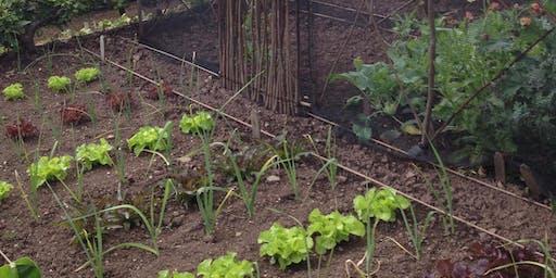 Organic fruit & vegetable gardening for beginners