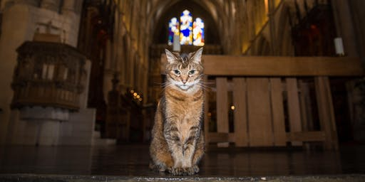 Doorkins Magnificat and Southwark Cathedral Presents: Stories of Cats