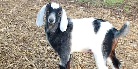 Sheep and Goat Feeding and Nutrition tickets