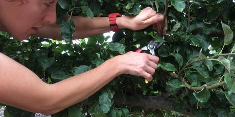 Learn How To Prune Espaliers and Fans (London) tickets