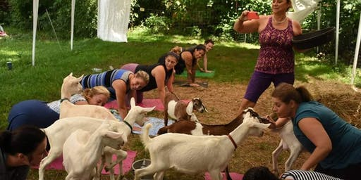 BEAWELL WITH GOAT & ALPACA YOGA!! HEALTHY FUN ON THE FARM