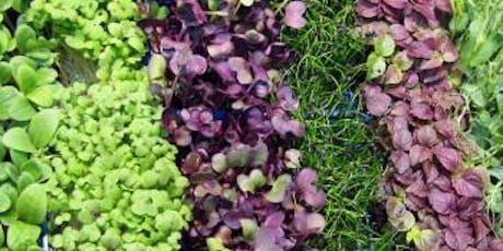 Year-Round Indoor Salad Gardening - Morning Session, Nov. 9 tickets